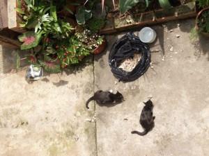En la foto se pueden observar varios gatos en el patio comiendo desperdicios.