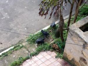 Los chulos visitan el barrio debido a la esta hediondez.
