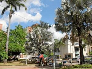 Las palmas, en sus diversas especies, están presentes en este parque.