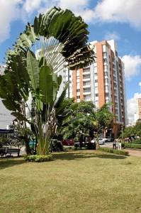 Palma Viajera (Ravenala madagascariensis) que por su forma de abanico llama la atención de los turistas.