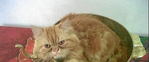 Garfield está perdido de su hogar