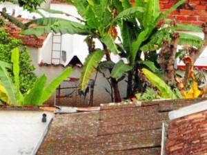La Periodista del Barrio de Sotomayor tomó desde su casa esta fotografía donde se alcanzan a ver las aves en la jaula y al aire libre.