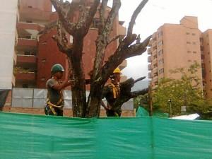 Tala de un árbol que estaba en riesgo.