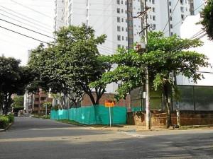 Árboles que están en riesgo de tala