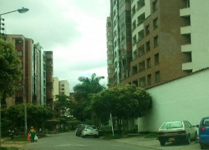 La Periodista del Barrio dice que estos árboles podrían estar en peligro de tala.