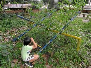 La maleza invade la mayoría del parque de Pan de Azúcar.