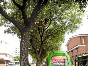 Esta foto fue tomada hace varias semanas, cuando apenas se instalaba en el árbol el indigente.