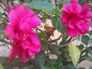Diferentes especies vegetales se encuentran en el parque La Flora, que combina colores y texturas.