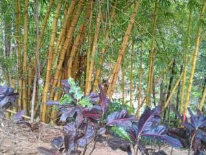 La vegetación nativa se fue enriqueciendo con otras especies.