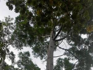 Diversidad de animales como ardillas y pájaros, engalanan el parque.