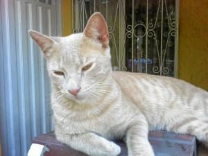 Este es el gato que busca un hogar que lo adopte.