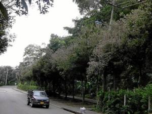 Esta zona frente del parque La Flora fue la primera en ser alertada por el caso de 'enchurcamieno' de las hojas de oitís.