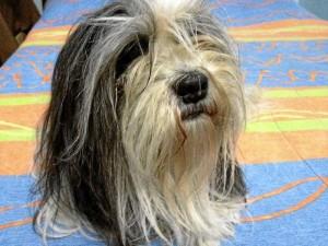 Esta es 'Tatis' la perra perdida.