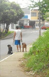 La Ley 742 de 2002 también obliga a los dueños de mascotas a recoger sus deposiciones.