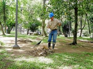 Las hojas que se recogen cada día son llevadas por el Acueducto para que a través de un proceso se puedan utilizar como abono.