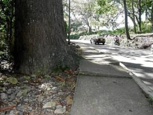 Por la vía a Lagos del Cacique también pueden verse árboles que han afectado los andenes.