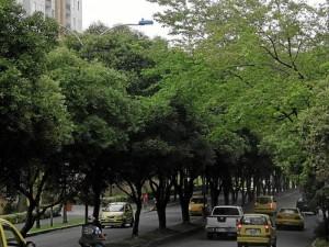 El sendero peatonal en la Transversal Oriental (a la derecha en la foto) es intransitable por la falta de luz.