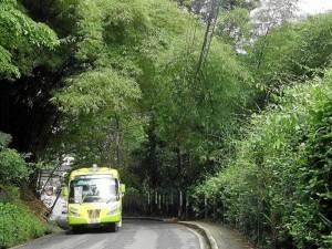 La vía a Las Colinas tiene varios puntos a oscuras por la maleza que tapa las bombillas.