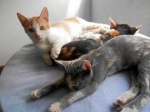 Estos son algunos de los gatos de Orlando Beltrán, quien denunció la pérdida de dos de los siete felinos que tiene en su vivienda.