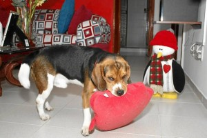 El perro, según sus dueños, comparte sanamente con los niños de esta familia.