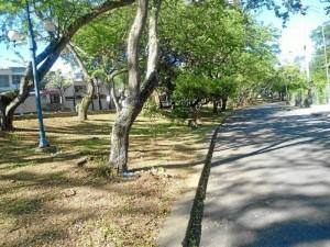 Así está, recién podado, el separador de la avenida La Rosita, frente a la Clínica Chicamocha.