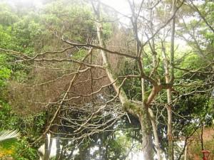 Las ramas secas de algunos árboles amenazan con caer sobre cualquier persona.