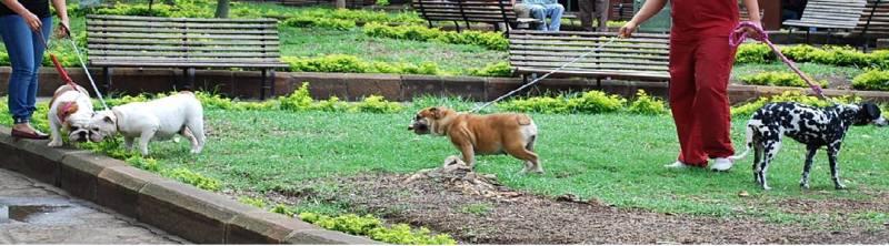 Las normas para tener una mascota están especificadas en la Ley 746 de 2002.