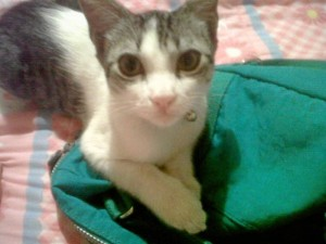 Este era Toby, el gato asesinado en el sector de El Cacique.