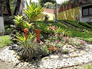 San Pío Estos jardines se mantienen hermosos gracias a la labor de tres señoras que trabajan en actividades pastorales de San Pío X.