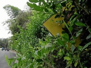 Esta no puede verse, está en la carrera 36 con calle 56, entre el colegio de La Presentación y el Parque La Flora.(Foto Javier Gutiérrez)