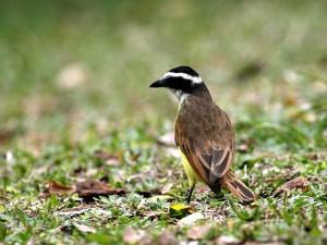 Concurso de fotografía sobre fauna silvestre