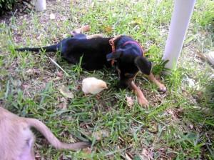 Jornada de adopción de perros este domingo 5 de agosto.
