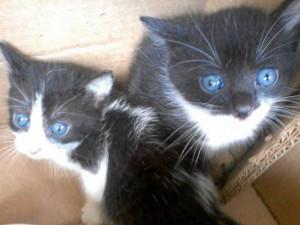 Estos gaticos esperan que alguien los adopte.