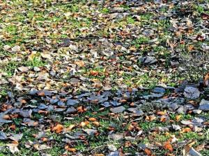 El naranja de las flores del búcaro engalanarían de nuevo a la ciudad. (Tomada de Internet)