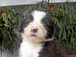 Este es uno de los perros que esperan un hogar grande que los adopte. Suministrada / GENTE DE CABECERA