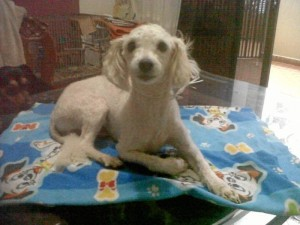 Este perrito busca un hogar que le brinde protección y afecto. Suministrada / GENTE DE CABECERA
