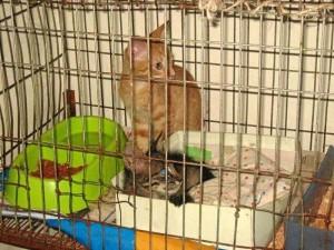Los gatos y perros en adopción también estarán presentes en la jor-nada.