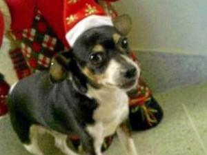 Este perrito se perdió cerca a Megamall hace varios días. Quien lo haya visto puede llamar a su dueña, quien lo espera en casa, al 318 6320220.