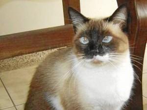 Eta gatica se perdió desde el fin de semana pasado y su amo, la seño-ra Mercedes Ardila de Ballesteros la extraña perdidamente. Quien la haya visto puede llamar al 6341379 y a los celulares 316 7805152 o 312 4705835.