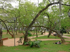 En el parque San Pío se llevará a cabo una de las actividades más importantes para el sector y que hace parte de la programación de la Feria Bonita. ( Foto Jaime Del Río )