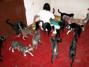 Cerca de 100 gatos tiene Norma Pradilla que serán luego trasladados al albergue de Lebrija, que construye con la ayuda de los amigos de los animales. ( Fotos Javier Gutiérrez )