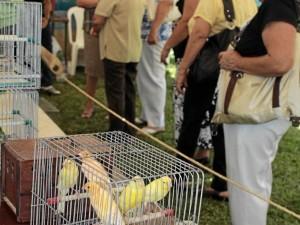 Los pájaros cantores son otros protagonistas en el festival.
