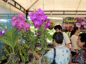 En el festival se podrán comprar especies de flo-res.