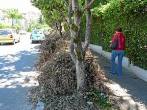 Las podas secas están en los antejardines y andenes de calle 10 avenida El Tejar entre carreras 35 y 36. (Fotos Nelson Díaz)