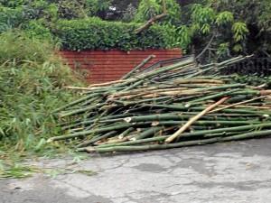 Estos fueron los bambúes talados hace una semana en Los Cedros, según la denuncia del Periodista del Barrio.