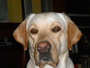Este es el perro perdido, se llama Matías.