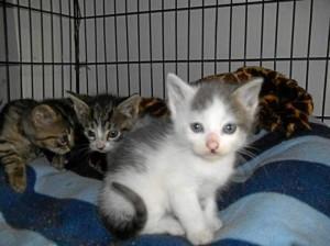 Este puede ser uno de los gatos que podrá llevarse a su casa.