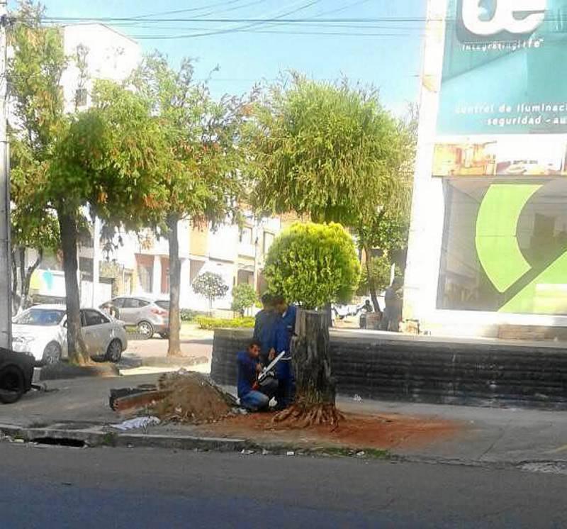 Tala de un árbol en Cabecera