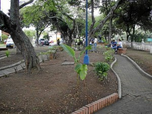 Los pasillos del parque fueron aseados y las podas de árboles fueron retiradas de inmediato.