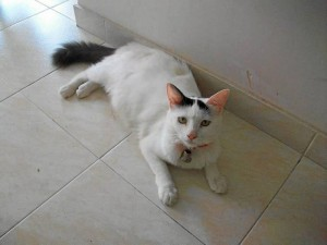 Esta es Kitty, la gata perdida en La Aurora.